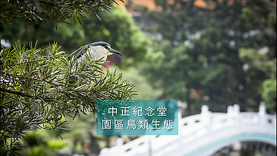 鳥兒樂園(60秒鳥類生態短片)